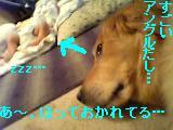 f0086355_10432785.jpg