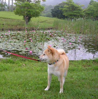 2006年6月23日・・・大地の匂い_f0060461_1341961.jpg