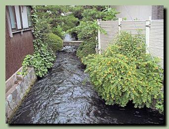 大野庄用水(その2)_f0079990_8555274.jpg