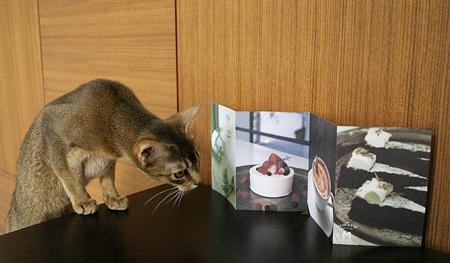 [猫的]ALOUETTE_e0090124_82425100.jpg