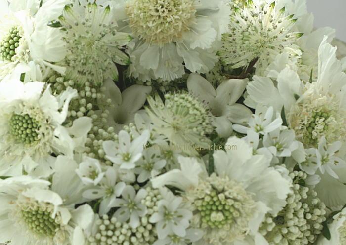 リングピロー 生花 かすかな白だけで_a0042928_7163257.jpg