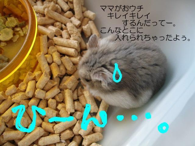 f0097734_22101748.jpg