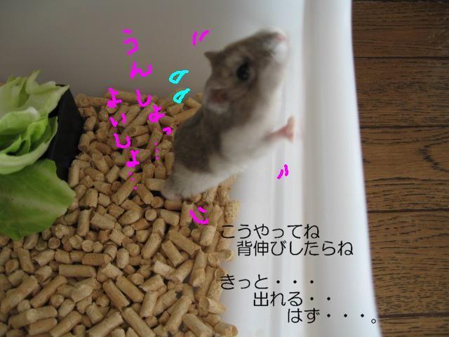 f0097734_2212268.jpg