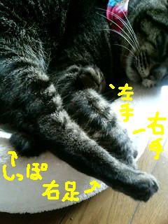 e0064547_17542.jpg