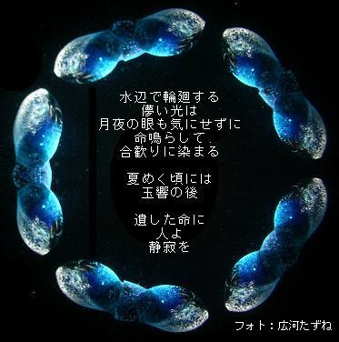 a0020189_0501346.jpg