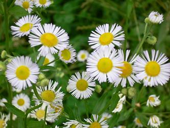 白い花 06-14_c0069048_634253.jpg