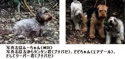 b0052652_22393835.jpg