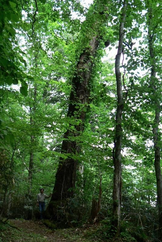 素晴らしい木と知りあいました_b0068572_21324862.jpg