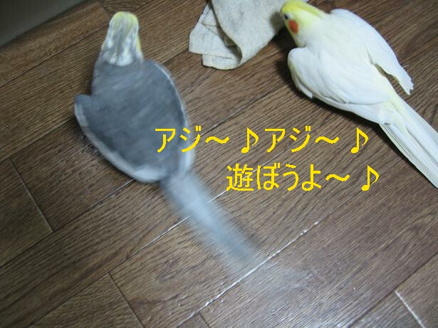 e0027078_933329.jpg