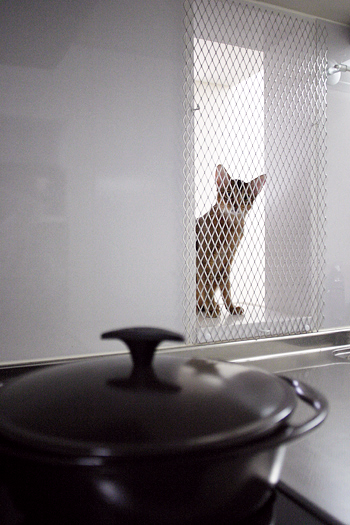 [猫的]男の料理_e0090124_9374782.jpg