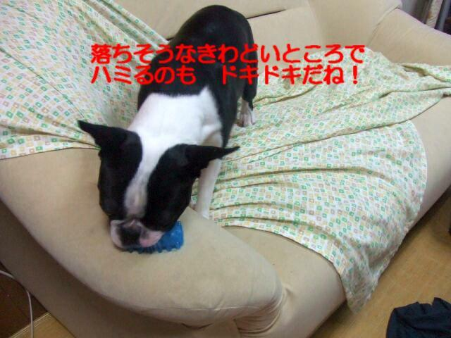 f0059334_153948.jpg