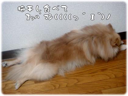 b0078073_183340.jpg