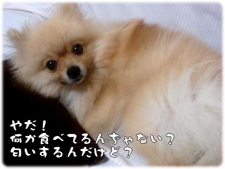 b0078073_1855998.jpg