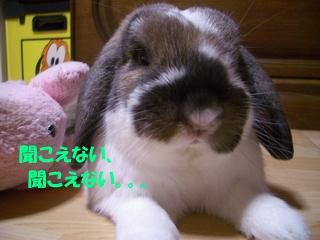 b0109692_2255761.jpg