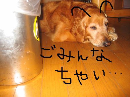 b0087914_1018181.jpg