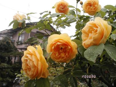 f0059818_172246100.jpg