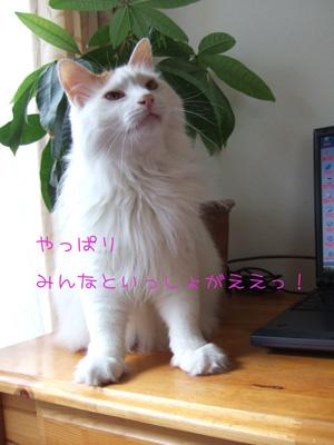 c0048042_2215166.jpg