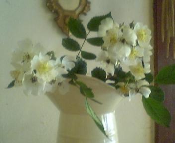 b0095051_9533296.jpg
