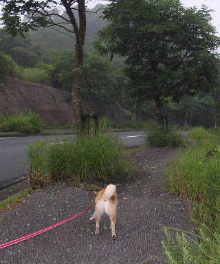 2008年6月27日大好きな田舎道_f0060461_12255526.jpg