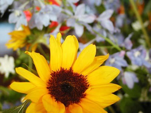 花と緑のフェスティバル_f0092382_11511891.jpg