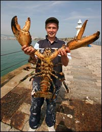 worlds largest crustacean giant spider crab essay The blue king crab, paralithodes platypus blue king crabs from the pribilof islands are the largest of all the king crabs, sometimes exceeding 18.
