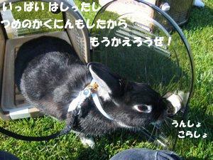 b0081503_1523478.jpg