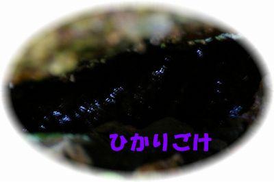 a0061206_943717.jpg