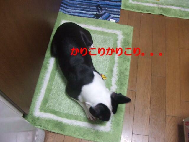 f0059334_10311552.jpg