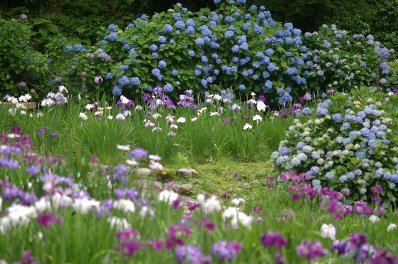 紫陽花も真っ盛り~卯辰山_d0043136_20344393.jpg