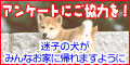b0072501_21165939.jpg