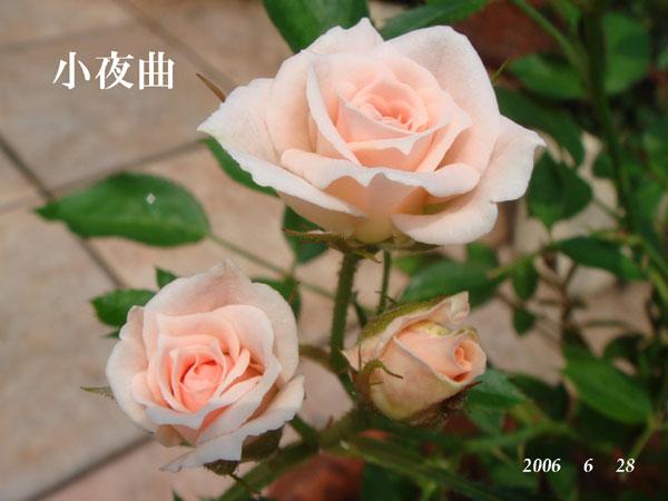 f0057006_1326512.jpg