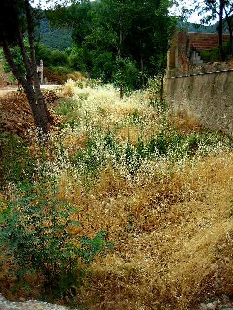 Prenafetaの村で 4_b0064411_2345917.jpg