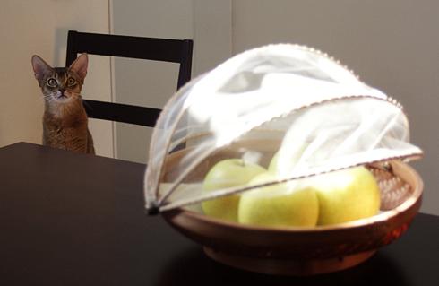 [猫的]フルーツコンポート_e0090124_1042389.jpg