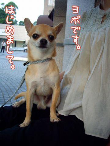 大小長短毛犬種玉付き学会_c0062832_16555338.jpg