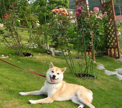 2006年6月29日(木)愛ちゃんの花めぐり_f0060461_15191558.jpg