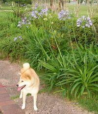 2006年6月29日(木)愛ちゃんの花めぐり_f0060461_158648.jpg