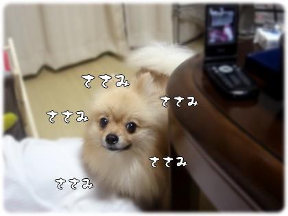 b0078073_2345334.jpg