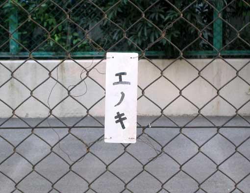 エノキ=榎?_b0057679_10171894.jpg