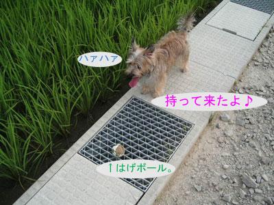 e0066883_20123299.jpg