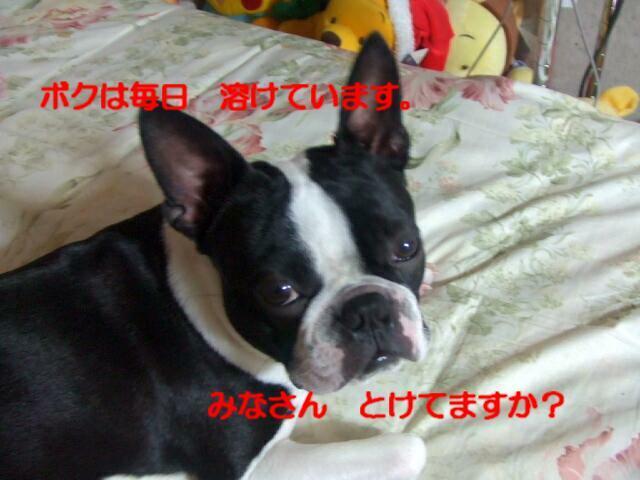 f0059334_93683.jpg