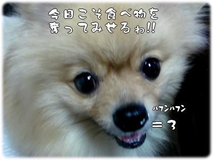 b0078073_22214721.jpg