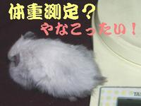 b0016983_125793.jpg