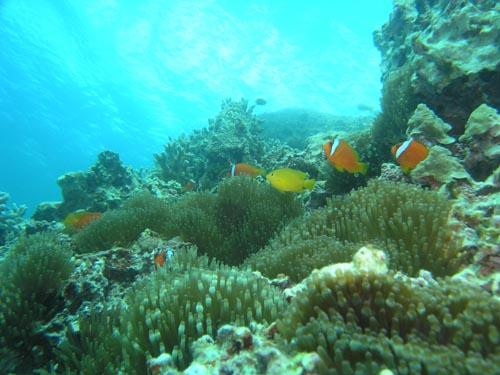 7月1日サンゴで大盛り上がり!_c0070933_2119023.jpg