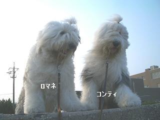 ♪散歩・・_f0072767_1662020.jpg
