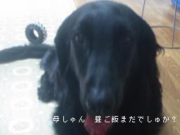 d0070289_15563639.jpg