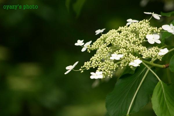 花も好き・・・_a0071514_183755.jpg
