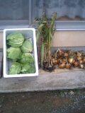 旬の野菜達_d0027486_1024915.jpg