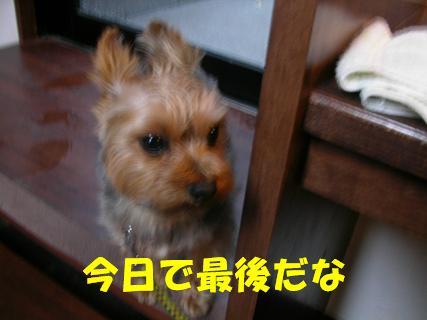 b0097394_14295656.jpg