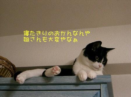 d0005397_18114887.jpg
