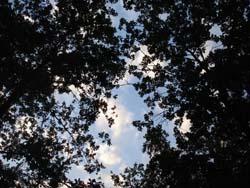 森の中での結婚パーティ_f0106597_1454189.jpg